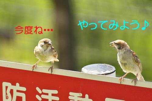 060_20110828211318.jpg