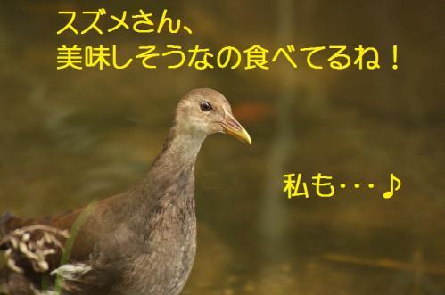 060_20110829224758.jpg