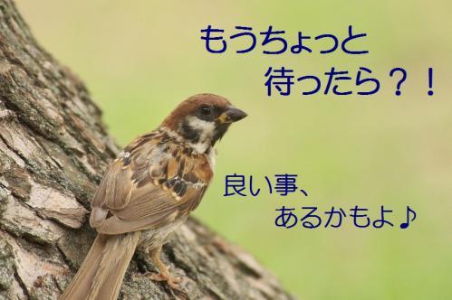 060_20110830214140.jpg