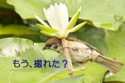 060_20110831213049.jpg
