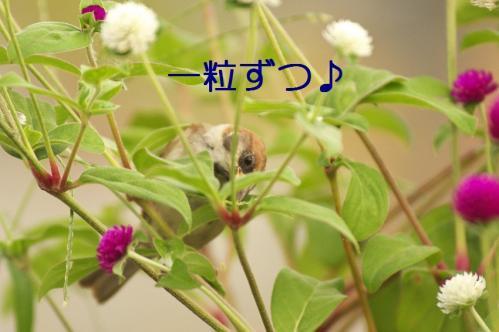 060_20111002232307.jpg