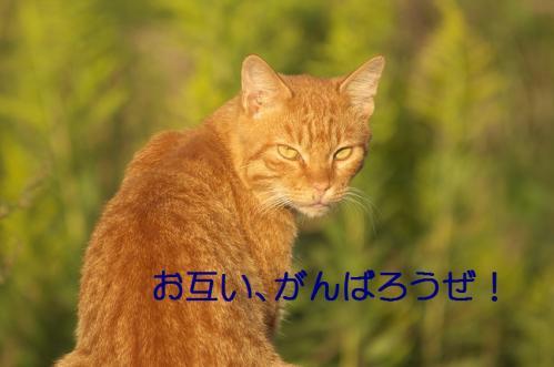 060_20111004221458.jpg