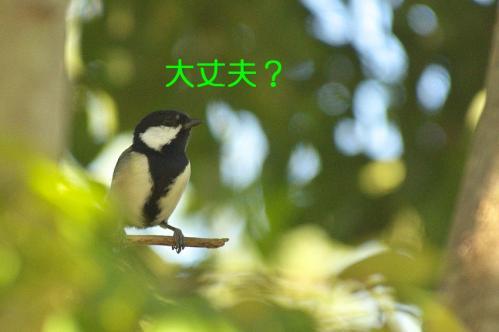 060_20111005213533.jpg