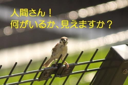 060_20111006190547.jpg