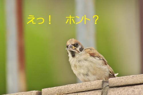 060_20111007221239.jpg