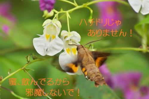 060_20111016185033.jpg