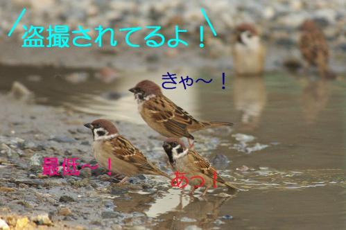 060_20111017220426.jpg
