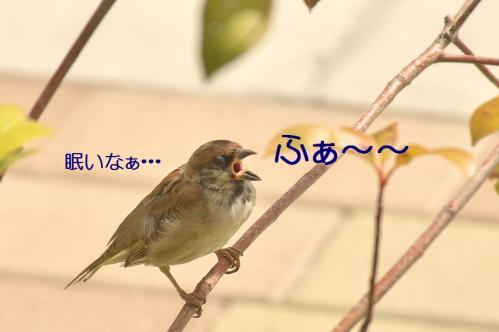 060_20111019222209.jpg