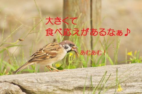 060_20111020220413.jpg