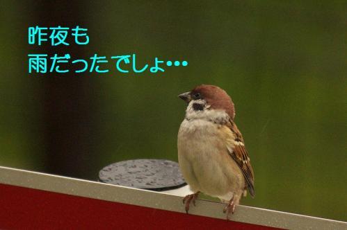 060_20111022182937.jpg