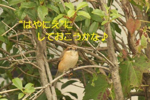 060_20111031213606.jpg