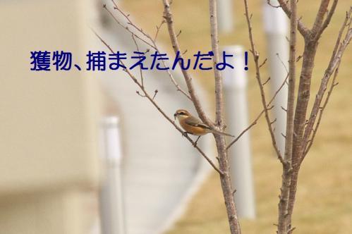 060_20111227205923.jpg
