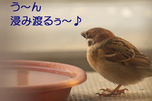 060_20111228225442.jpg