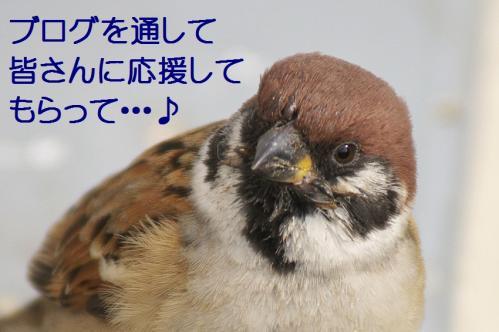 060_20111230192616.jpg