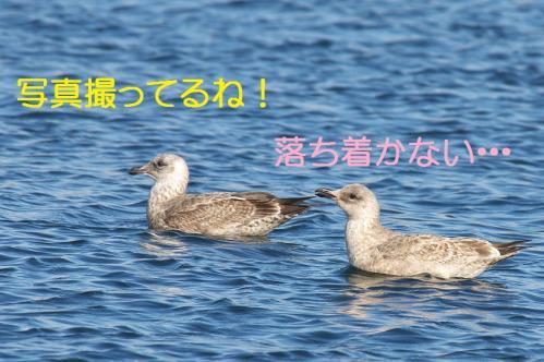 060_20120108212012.jpg