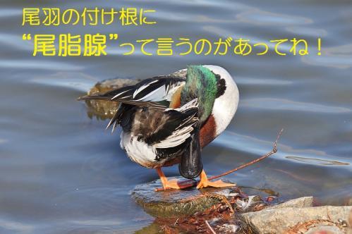 060_20120125231841.jpg