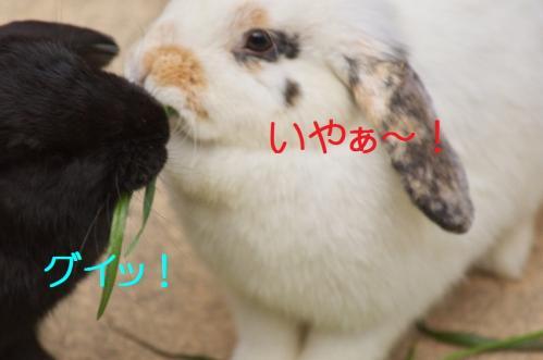 060_20120130221453.jpg