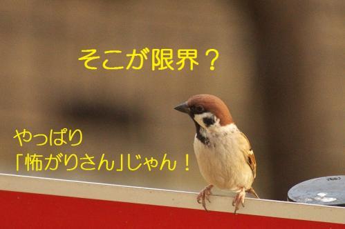 060_20120202222724.jpg
