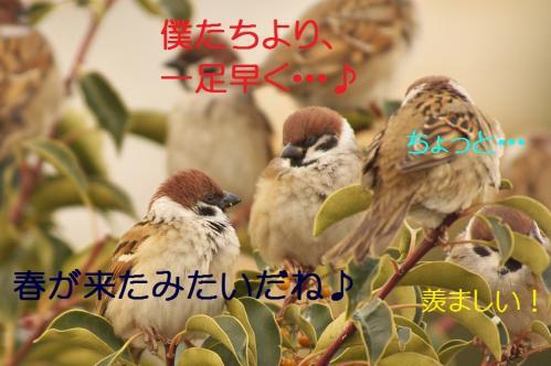 060_20120205210156.jpg