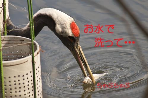 060_20120214222156.jpg