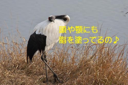 060_20120215214549.jpg