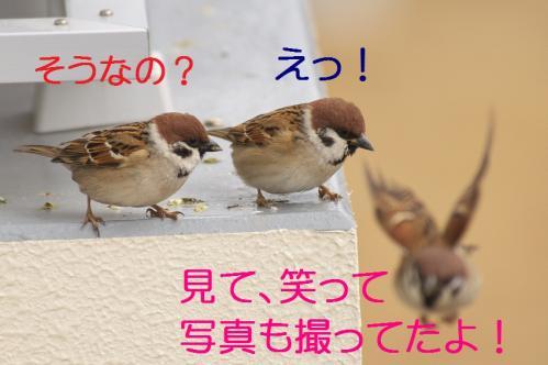 060_20120229214229.jpg