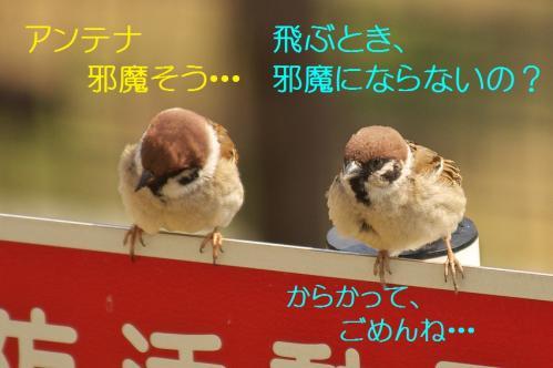 060_20120414204435.jpg