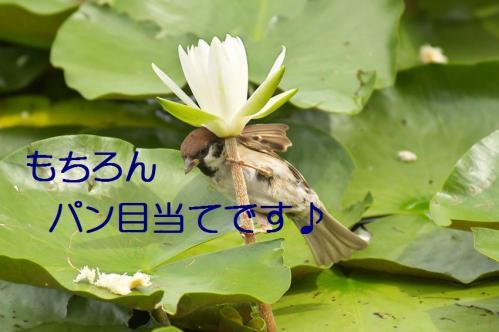065_20110831213157.jpg