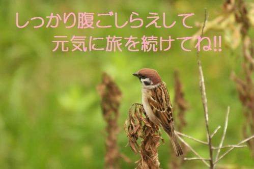 06_20101101220420.jpg