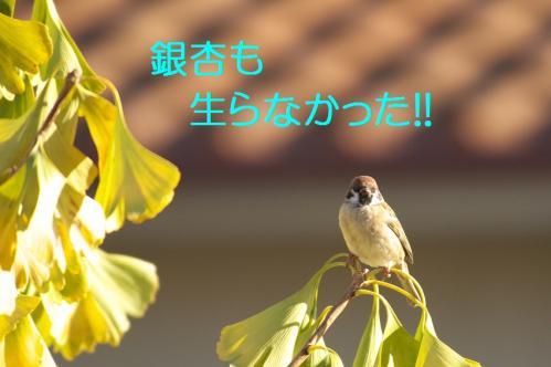 070_20101130191718.jpg