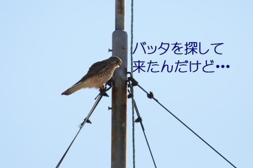 070_20101204222317.jpg