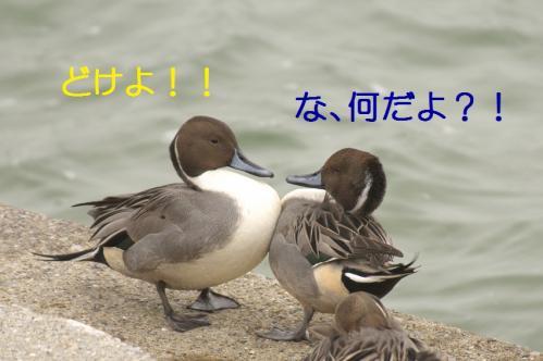 070_20101210214202.jpg