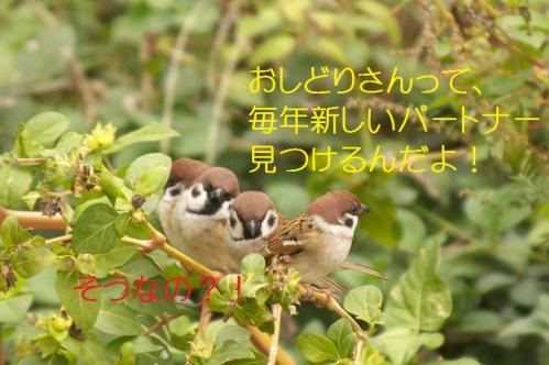 070_20101219200256.jpg