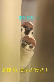 070_20110118214642.jpg
