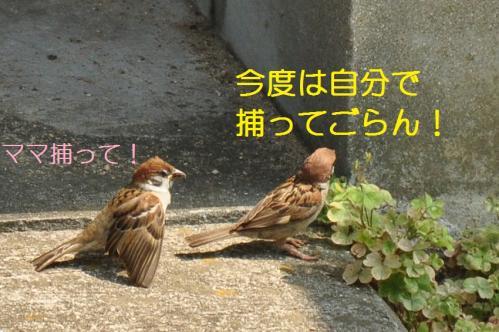 070_20110131212042.jpg