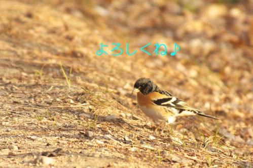 070_20110209221703.jpg
