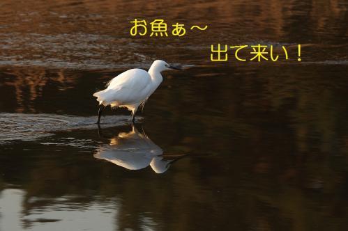 070_20110315205648.jpg