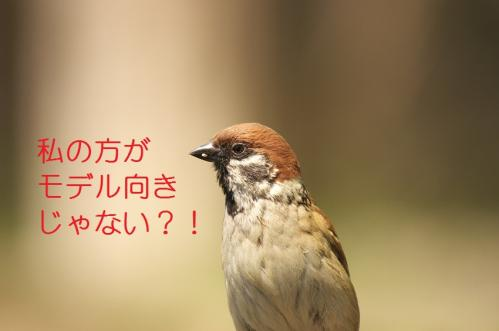070_20110504205921.jpg