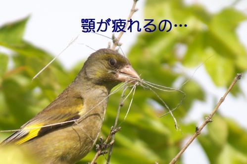 070_20110608221401.jpg