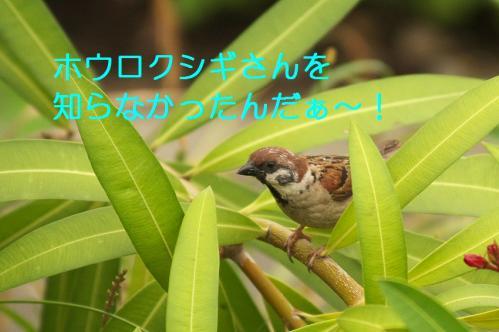 070_20110621205308.jpg