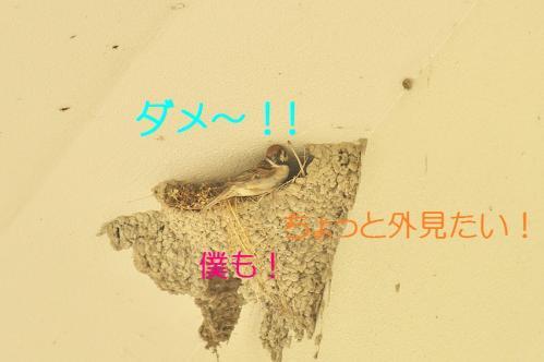 070_20110731194757.jpg