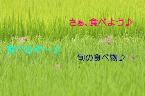 070_20110806212208.jpg