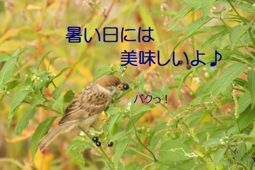 070_20110808211642.jpg