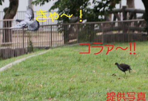 070_20110828211318.jpg