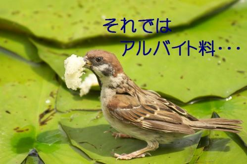 070_20110831213156.jpg