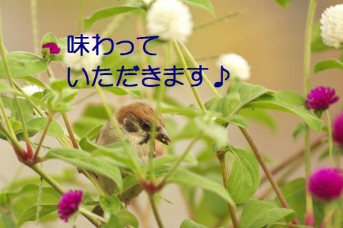070_20111002232559.jpg