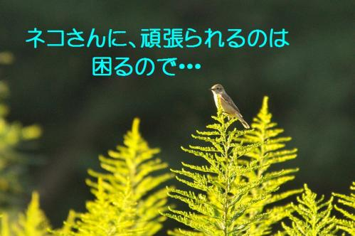 070_20111004221600.jpg