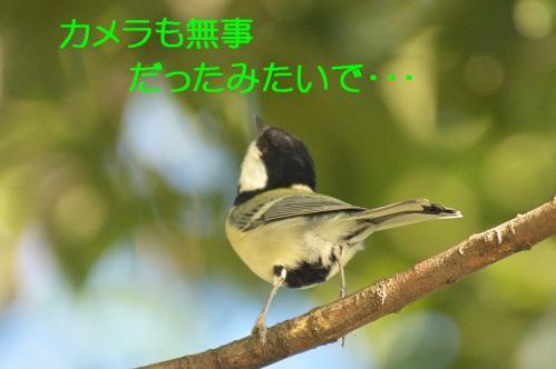 070_20111005213532.jpg