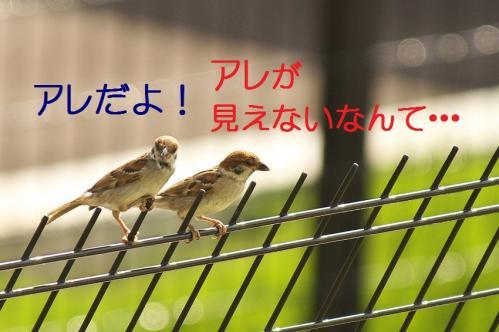 070_20111006190939.jpg