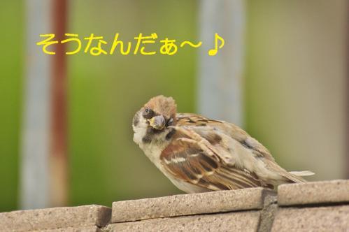 070_20111007221239.jpg